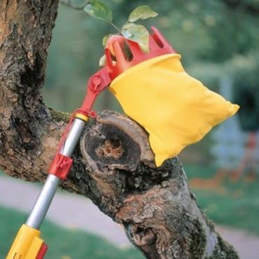 Уход за деревьями и кустарниками